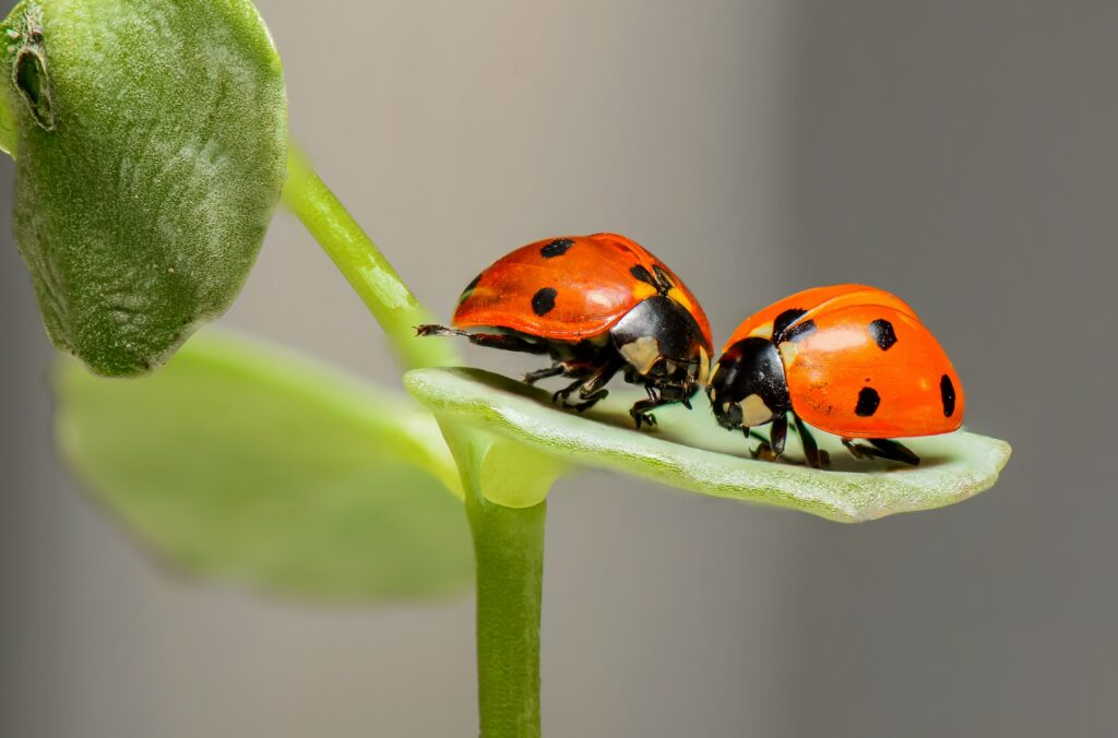 bugs-color-colorful-144243